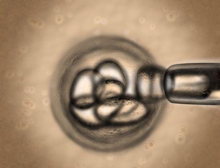 aparato reproductor: Celda que se est� dibujando frente a un peque�o grupo bajo un microscopio