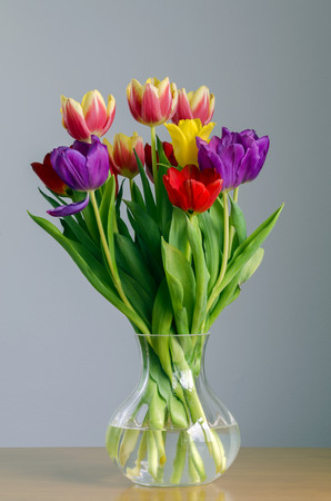 colorful still life: Still life portrayal of brightly colored tulips in a glass vase