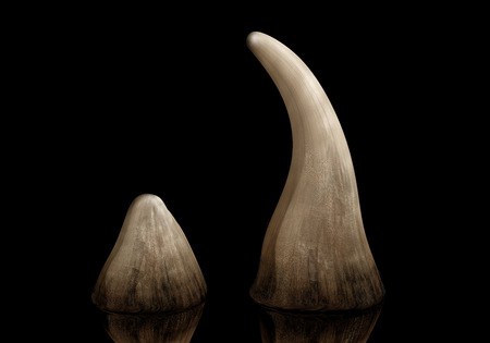 and traditional chinese medicine: Rhinoceros horn sold on the black market for use in traditional Chinese medicine