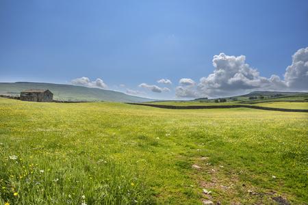 flower fields: Wildflowers across a meadow on a sunny day