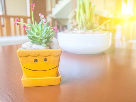 cute square treepot with sun light.
