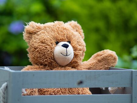brown teddy bear sat in old wooden box