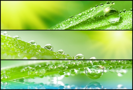 dewdrops: Banners - Grass with dewdrops. Shallow depth of field.
