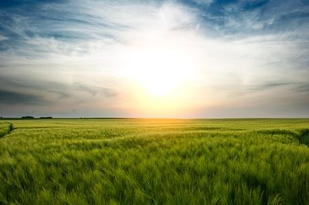 welfare: A sunset over a wheat field