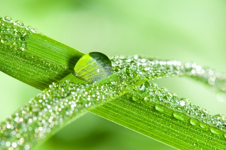 dewdrops: Dewdrops on the grass leafs. Shallow DOF