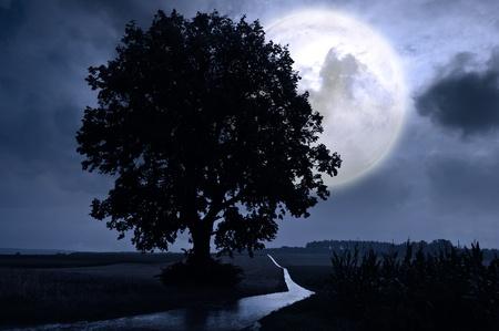 Full moon over a corn field