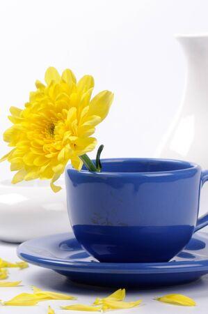 yellow tea pot: Yellow mums in a teacup