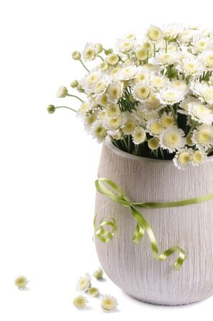 mums: White mums flowers isolated over white background Stock Photo