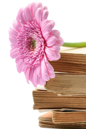 Stack of old books with pink mum flower over white photo