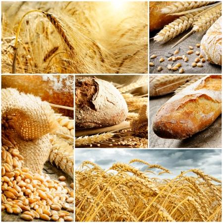 harina: Conjunto de pan tradicional de trigo, y cereal.Collage