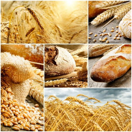 yellow flour: Set of traditional bread, wheat and cereal.Collage