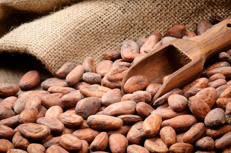 Cocoa beans and wooden scoop on wooden table photo