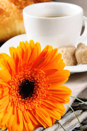 Morning coffee and freshly cut mums flower Stock Photo - 12429703