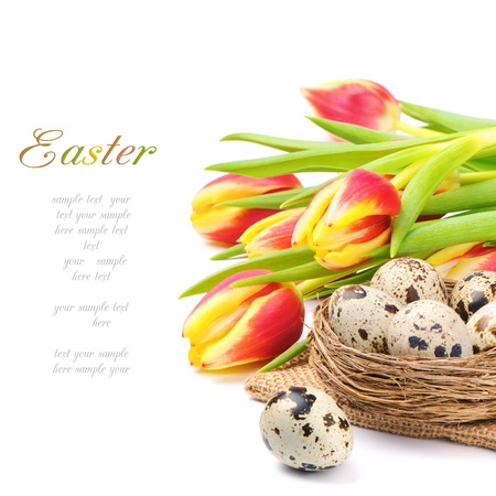 Spring tulips and nest with quail eggs photo