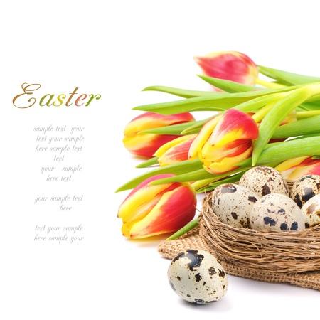 quaglia: Tulipani primavera e nido con uova di quaglia