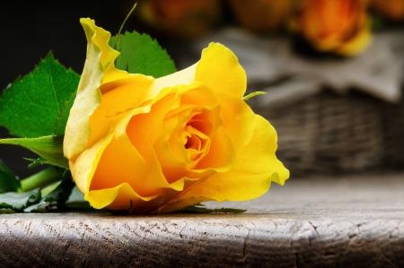 rosas amarillas: Recién cortada rosa amarilla sobre una mesa de madera rústica Foto de archivo