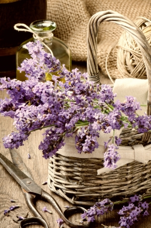 Bunch of freshly cut lavender in a basket photo