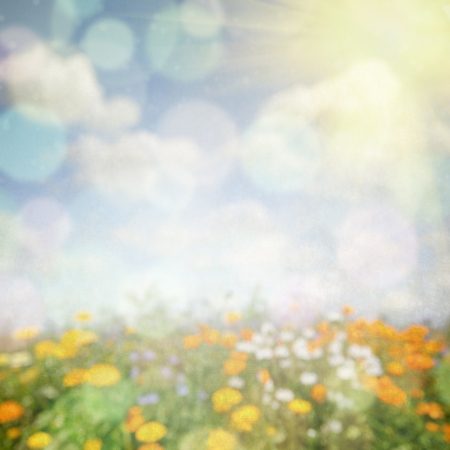 Abstract nature background with flower field photo