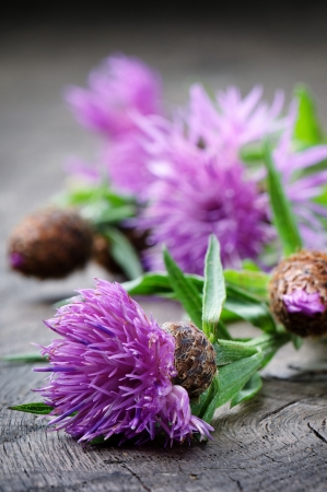 celtic: Scottish thistle flower on wooden table Stock Photo
