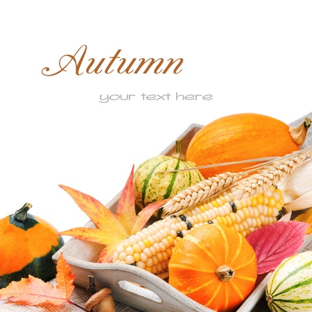 organic background: Autumn still-life with pumpkins and corn isolated over white