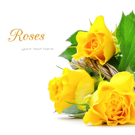 Yellow roses isolated over white photo