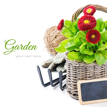 gardening tools: English daisies with garden tools isolated over white