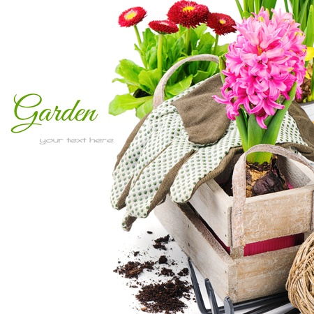 Colorful flowers and garden tools isolated over white photo