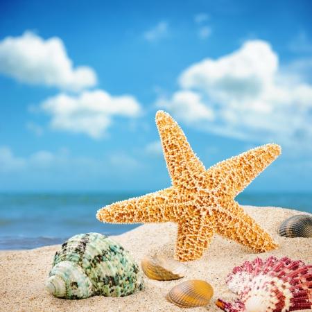 arena: Estrella de mar y conchas de colores en la costa