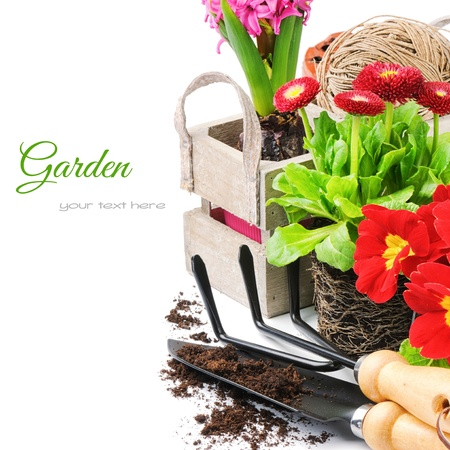 Fresh flowers with garden tools isolated over white photo