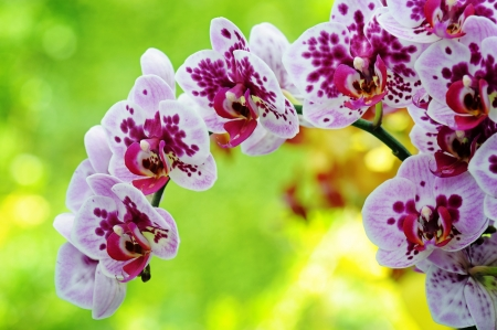 spotted flower: Closeup of purple orchid on green background Stock Photo