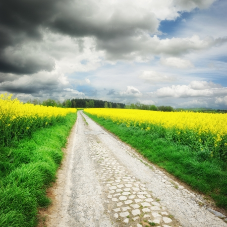 Landscape with country road and rapeseed field Stock Photo - 19985250