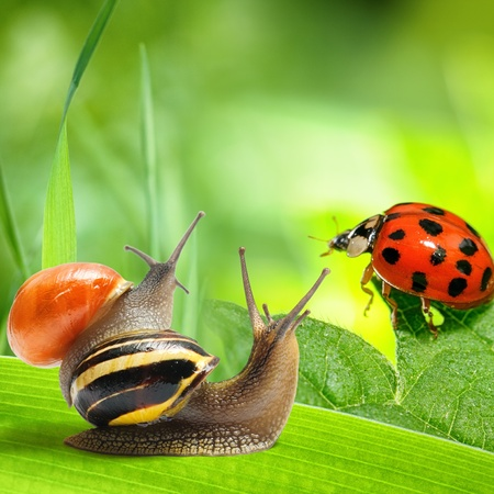 Two snails and ladybug looking at green background. Nature concept photo