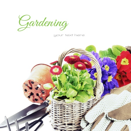 replanting: Colorful flowers and garden tools isolated over white