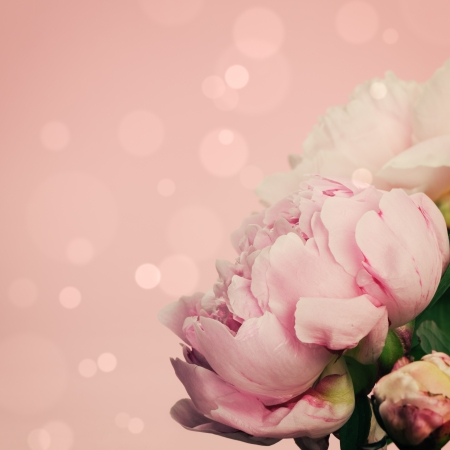 Pink peonies on pastel background with copyspace photo