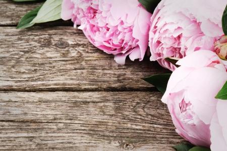 木製の背景にピンクの牡丹の花のフレーム 写真素材