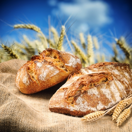 Freshly baked traditional bread with golden wheat field on background photo