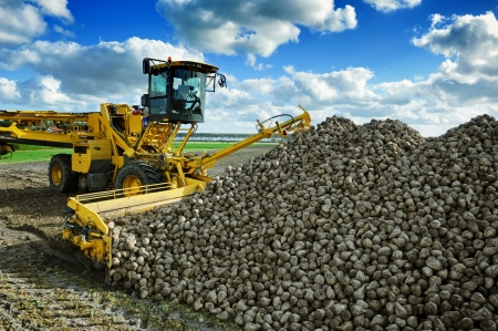 Agricultural vehicle harvesting sugar beets at sunny autumn day Stock Photo - 21745376