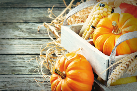 Autumn harvest setting with pumpkins and corn photo
