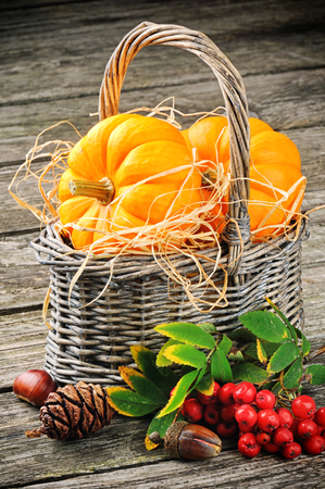 Autumn still-life with fresh pumpkins in basket and ash berries photo