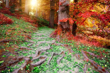 Beautiful autumn forest in red and orange tones photo