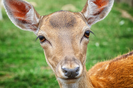 Close-up on baby deer in wild nature