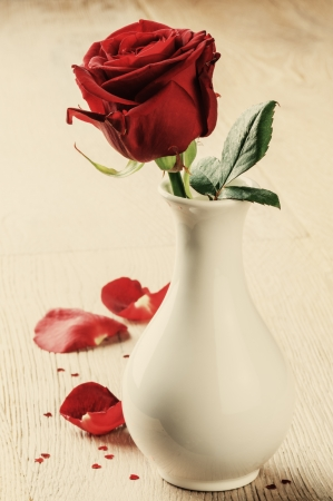 Beautiful red rose in a vase photo