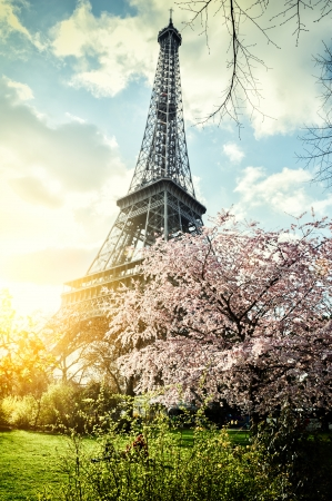 Springtime in Paris. Eiffel tower (toned image) photo