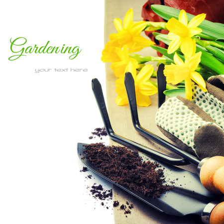 replanting: Garden tools and spring daffodils isolated over white