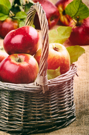Fresh organic apples in wicker basket photo