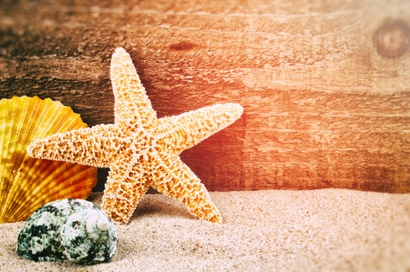 Sea star and shells on rough wood background photo