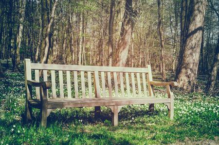 garden bench: Wooden bench in sunny spring park