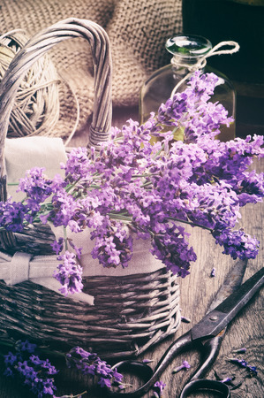 Bunch of freshly cut lavender in basket photo