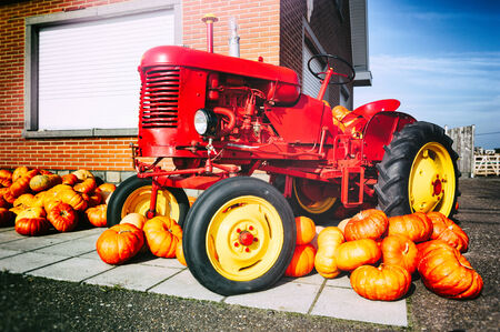old tractors: Decorative tractor and fresh pumpkins for sale