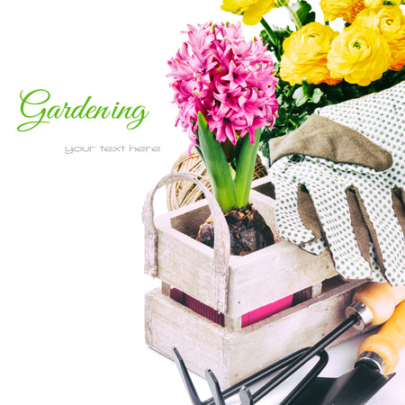 weeding: Garden tools and spring flowers isolated over white